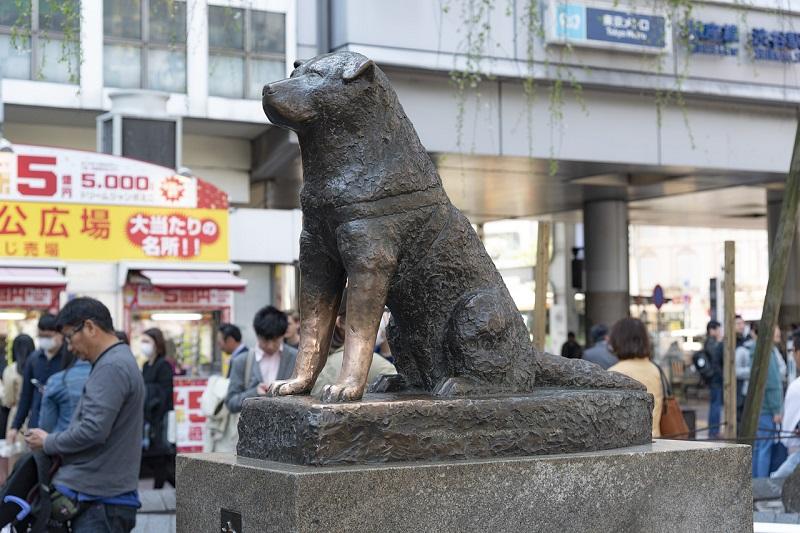 Tokyo - Statuie Hachiko